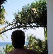 Monkey outside our room