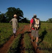 Approaching the crags through farmers fields of Vinales, Cuba
