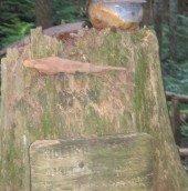 Ed Sullivan Trail 023