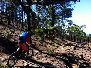Riding through the Canarian Pine forests.