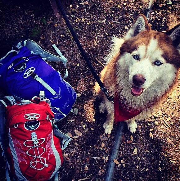 @ahuskynamedshasta hiking up Bear Flat trail on Mt. Baldy with a pair of Talon 22 packs.