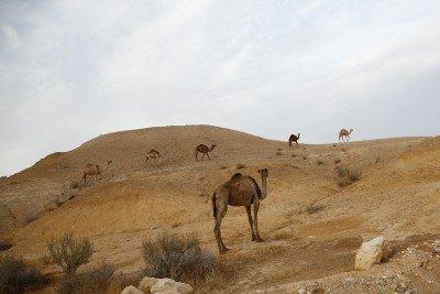 Masada-Arad-Yerucham-310