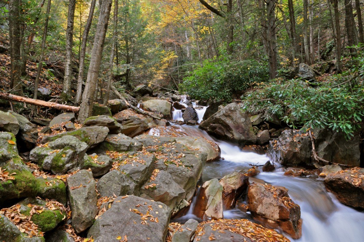 Along the Lehigh Gorge State Park Trail. Image via MissTessmacher