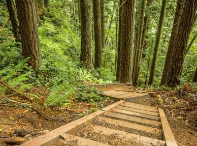 Stairs through the woods on the Rock Trail in Larrabee State Park near Bellingham, Washington. Image via Mark Pouley