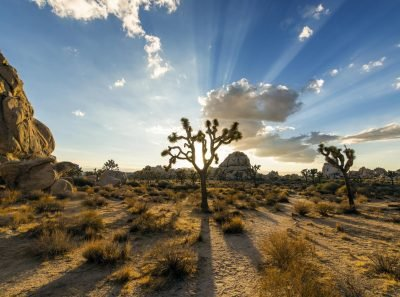 Joshua Tree National Park. Image via Christopher Michel