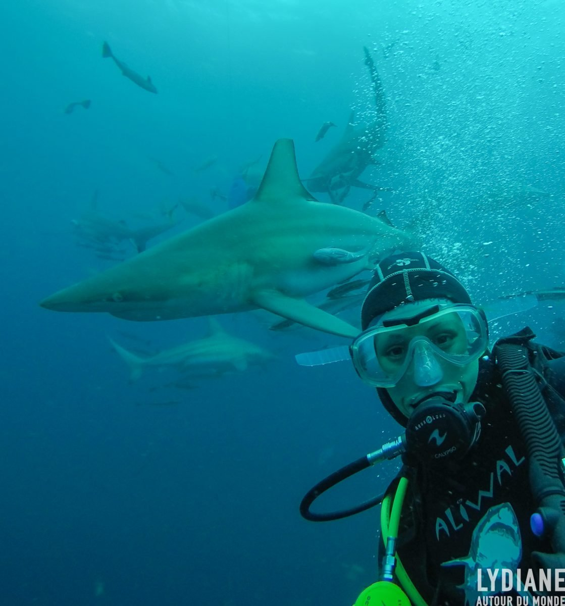 Diving with sharks in Umkomaas, South Africa